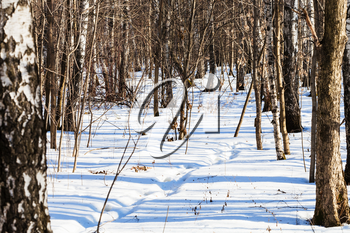 footpath in snowy forest in sunny winter day