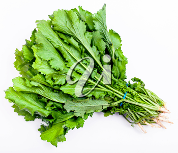 bunch of fresh cut green cress herb on white background