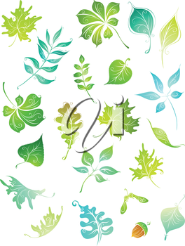Hand-drawn nature elements for your design isolated on white background.