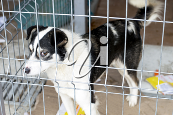 portrait of a white and black dog in the shelter, the theme of charity, animal shelter, dog rescue