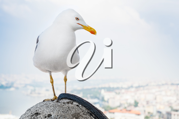 White big seagull sitting on fence of Galata Tower with blurred cityscape of Istanbul, Turkey on a background