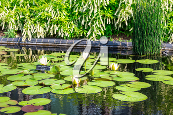 Reservoir with lilies and water-lilies in botanical garden.