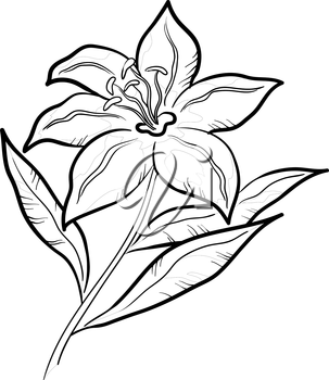 Flower lily, monochrome pictogram, isolated on white background. Vector