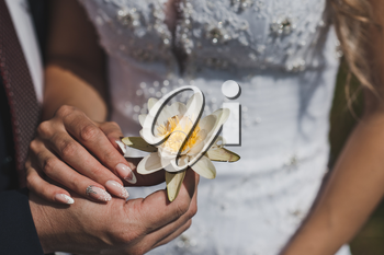 Wedding rings in a white Lily.