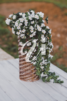 Bacopa is a common blooming bouquets in a wicker vase.