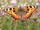 The bright butterfly flits over colours