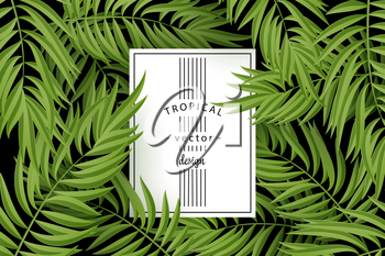 Tropical Palm leaves. Tropic palm. Tropical Palm leaf. Green tropic palm. Green palm summer tropical leaves. Tropic leaves frame. Green summer tropic palm leaves. Square frame.