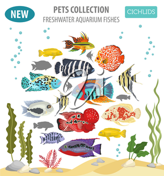 Freshwater aquarium fishes breeds icon set flat style isolated on white. Cichlids. Create own infographic about pets. Vector illustration