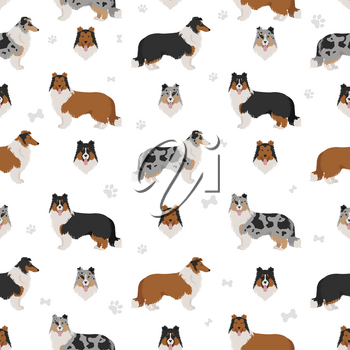 Rough collie clipart. Different poses, coat colors seamless pattern.  Vector illustration