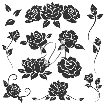 Hand drawn roses isolated on white background. Vector flourish engraving templates