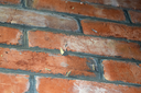 Other moths on a brick wall. The flying insects to the light bulb.