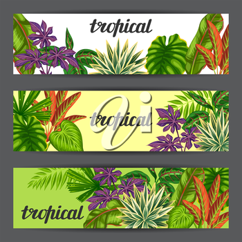 Banners with tropical plants and leaves. Image for advertising booklets, banners, flayers.