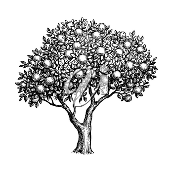 Apple tree. Ink sketch isolated on white background. Hand drawn vector illustration. Retro style.