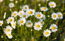 Spring flowers as a background. Natural background
