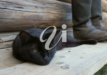 Black cat lying beside tarpaulin boots on a wooden bench. Focus on the boots.