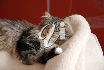 Cats, lovely fluffy pets. Cat's everyday life