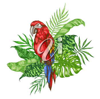 Green palm leaves and red parrot on a white background. Hand drawn tropical vector illustration