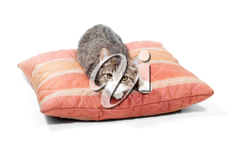 Small, gray kitten sleep on the red  pillow