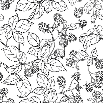 raspberry branches seamless pattern on white background