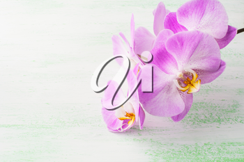 Pink phalaenopsis orchids branch . Flower frame. Flower background. Flower bouquet. Greeting card. Mothers day. Place for text. Copy space. Orchids