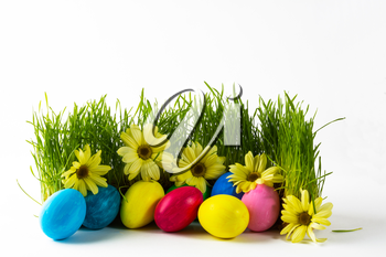 Multicolored Easter eggs in fresh green grass with yellow flowers daisy. Easter background. Easter symbol. Easter hunt. Copy space