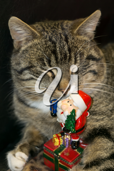 Cute tabby cat with ceramic Santa Claus, holiday background.